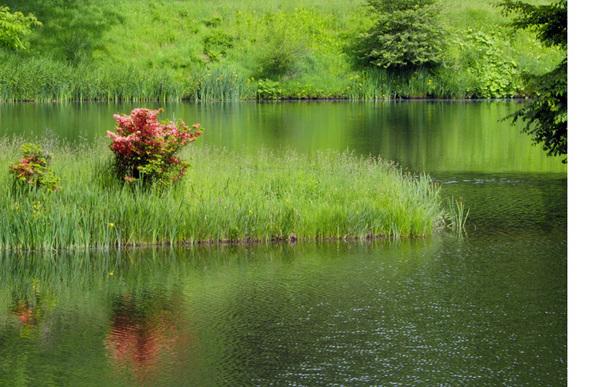池2.jpg